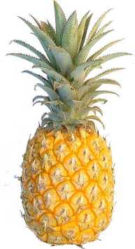 Pineapples fruit