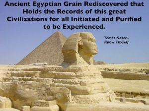 Ancient Egyptian Grain